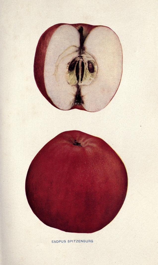 Why Your Supermarket Sells Only 5 Kinds Of Apples