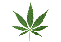 pot leaf